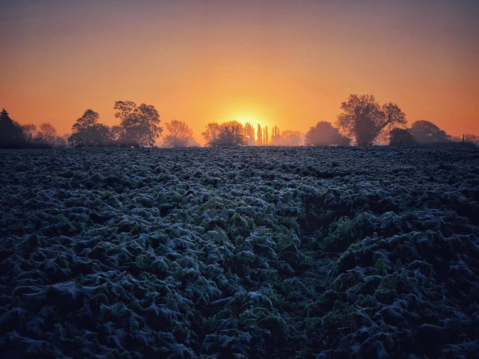 Frosty ground and fantastic colours in a sunrise over the countryside