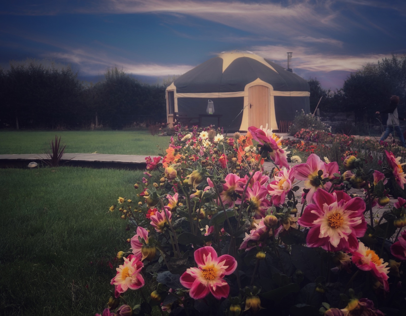 Glamping yurt set in beautiful flowers