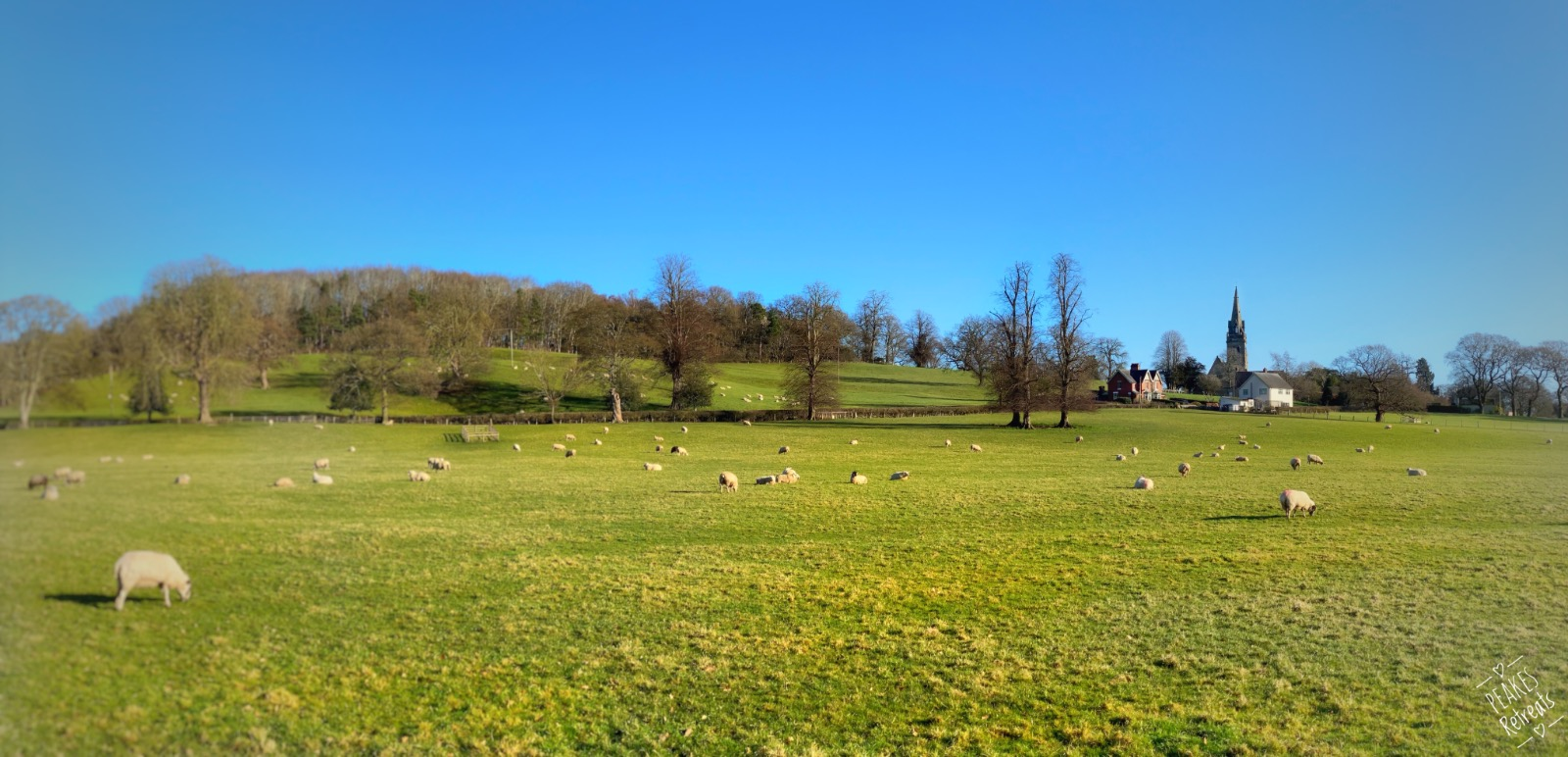 Field of sheep, blue sky