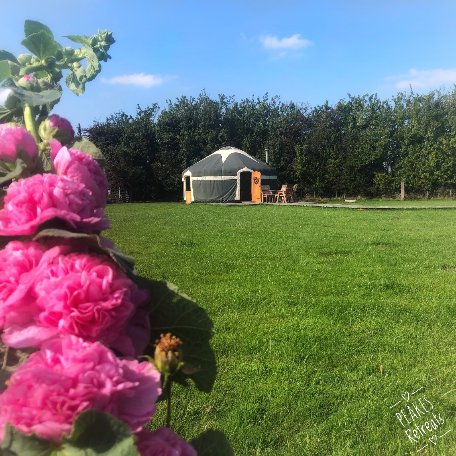 Pink hollyhock in foreground, glamping yurt in background