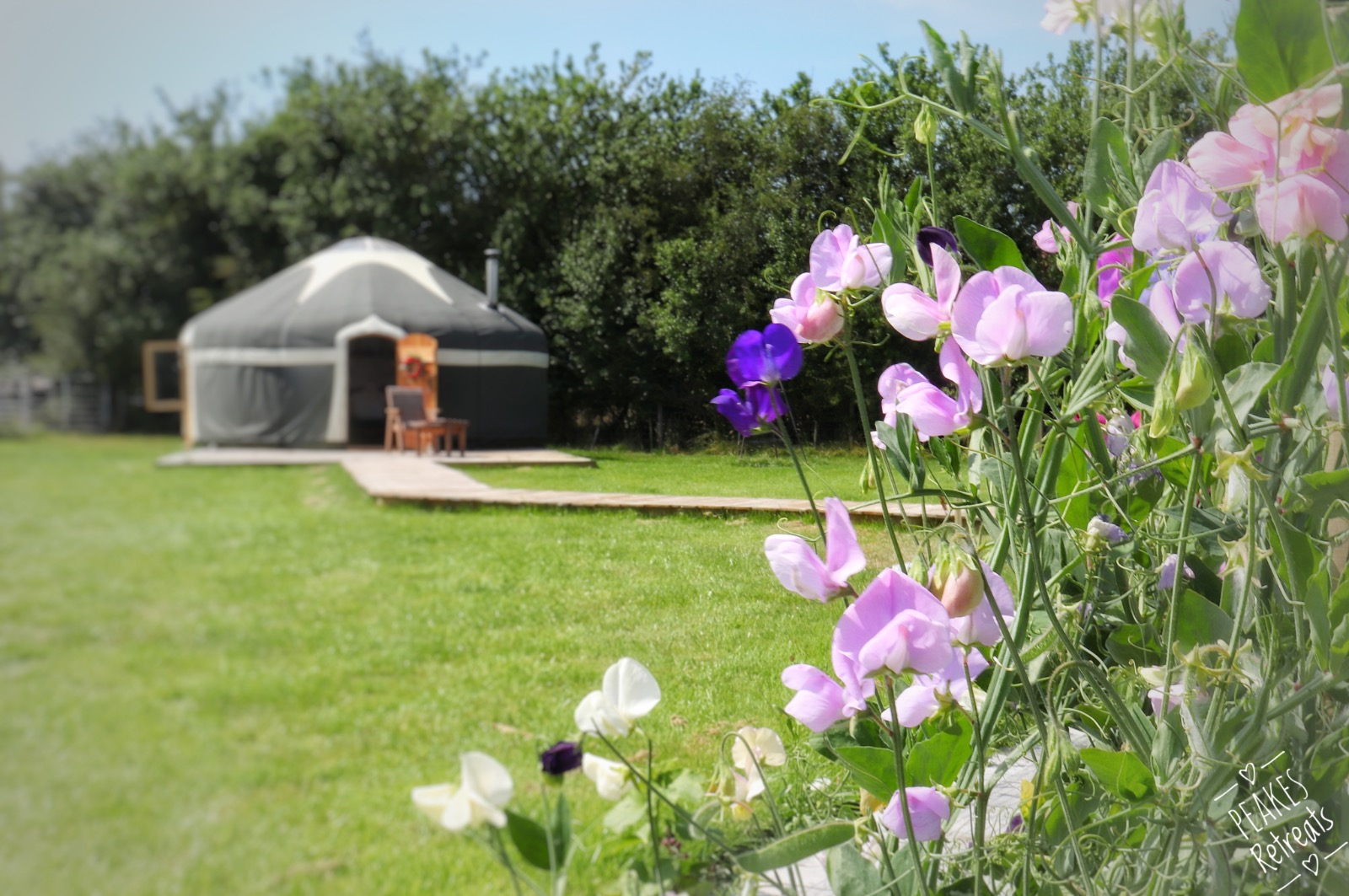 yurt in sunshine with pretty sweetpeas