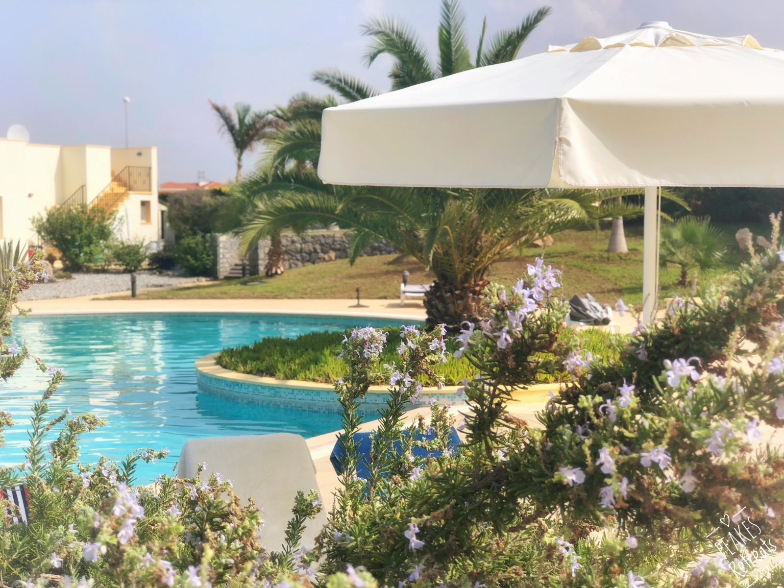 Swimming pool at Cyprus holiday villa as viewed through beautiful flowers